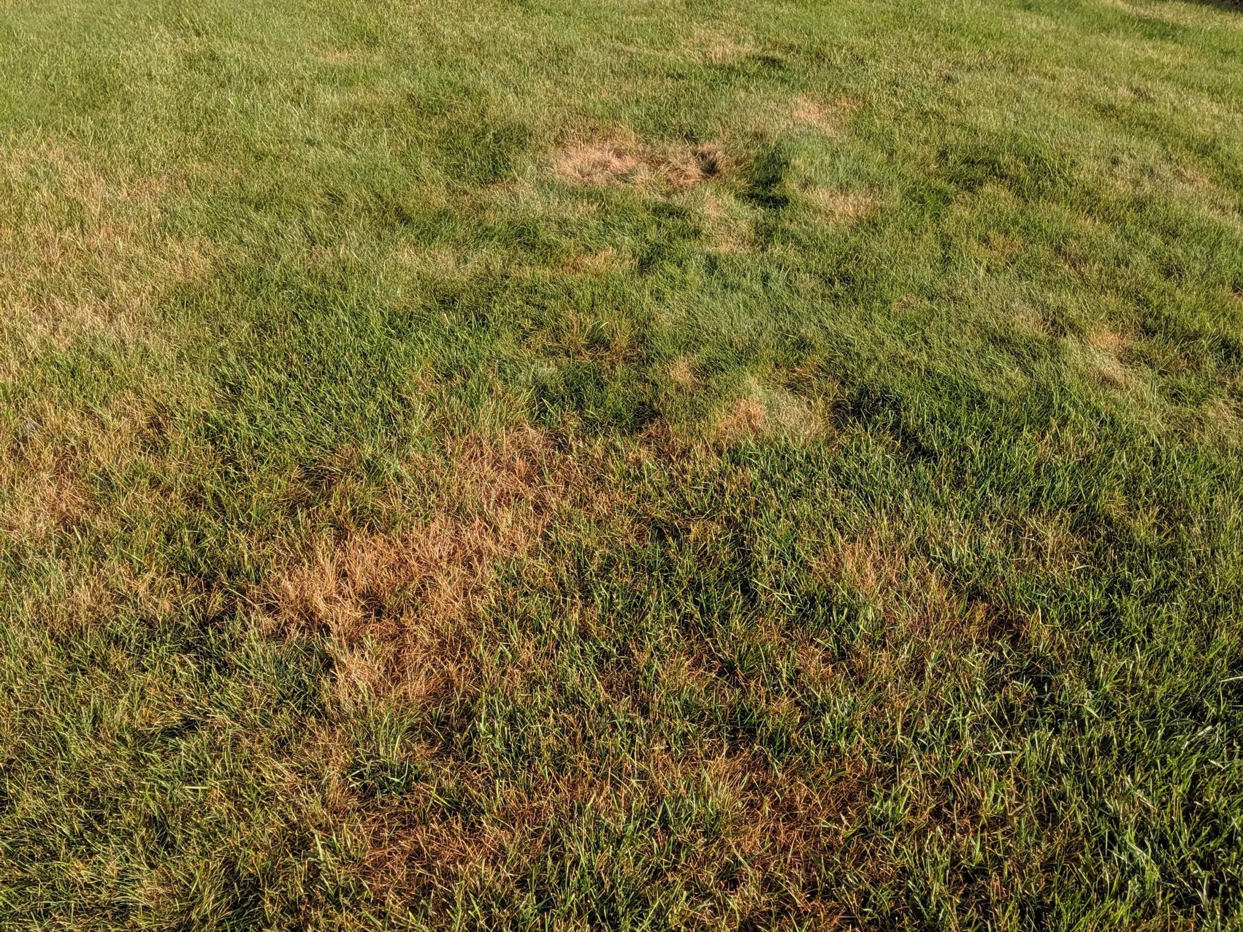 Spring Lawn Issues for MN