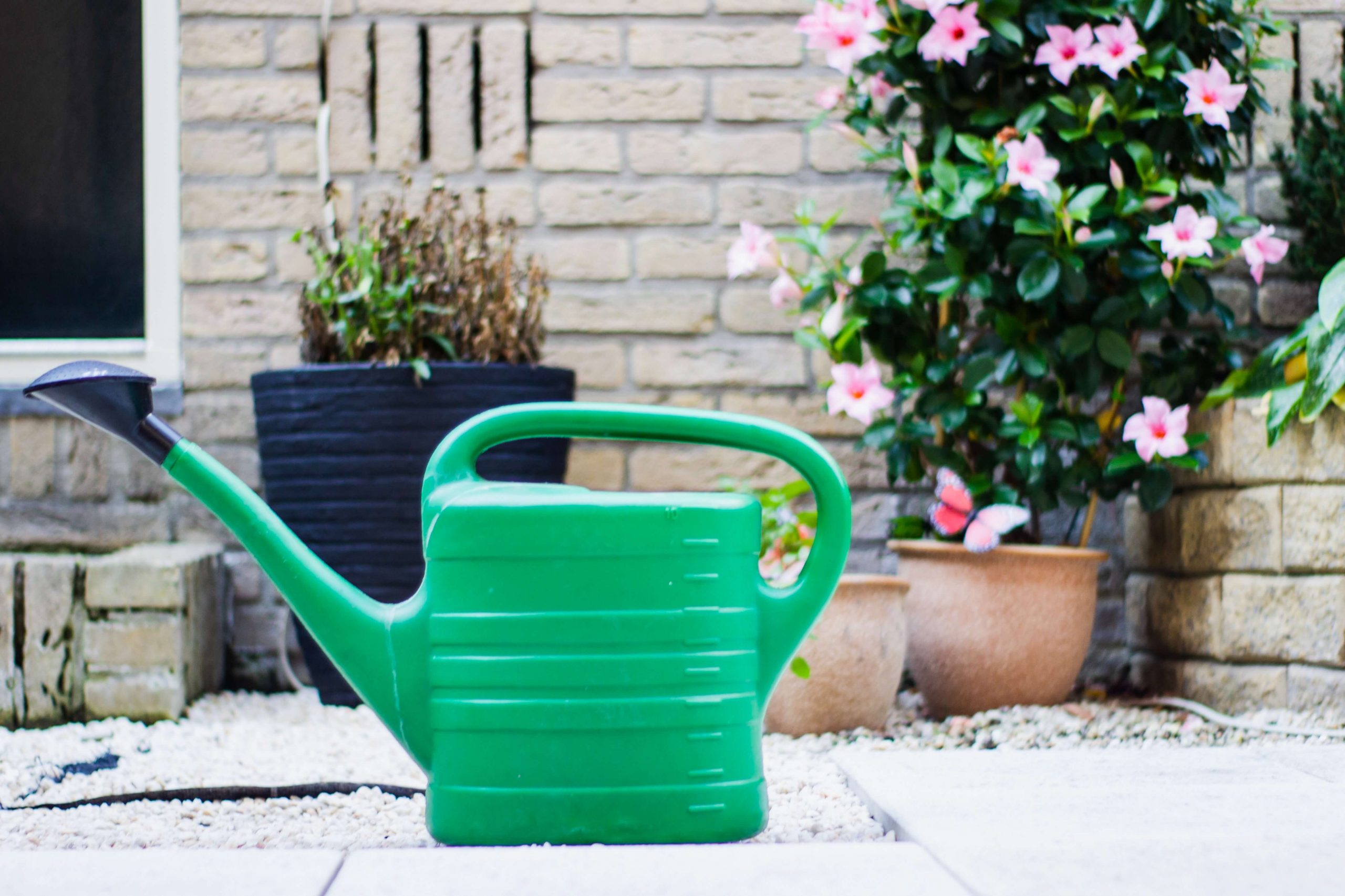 Are You Watering Correctly?
