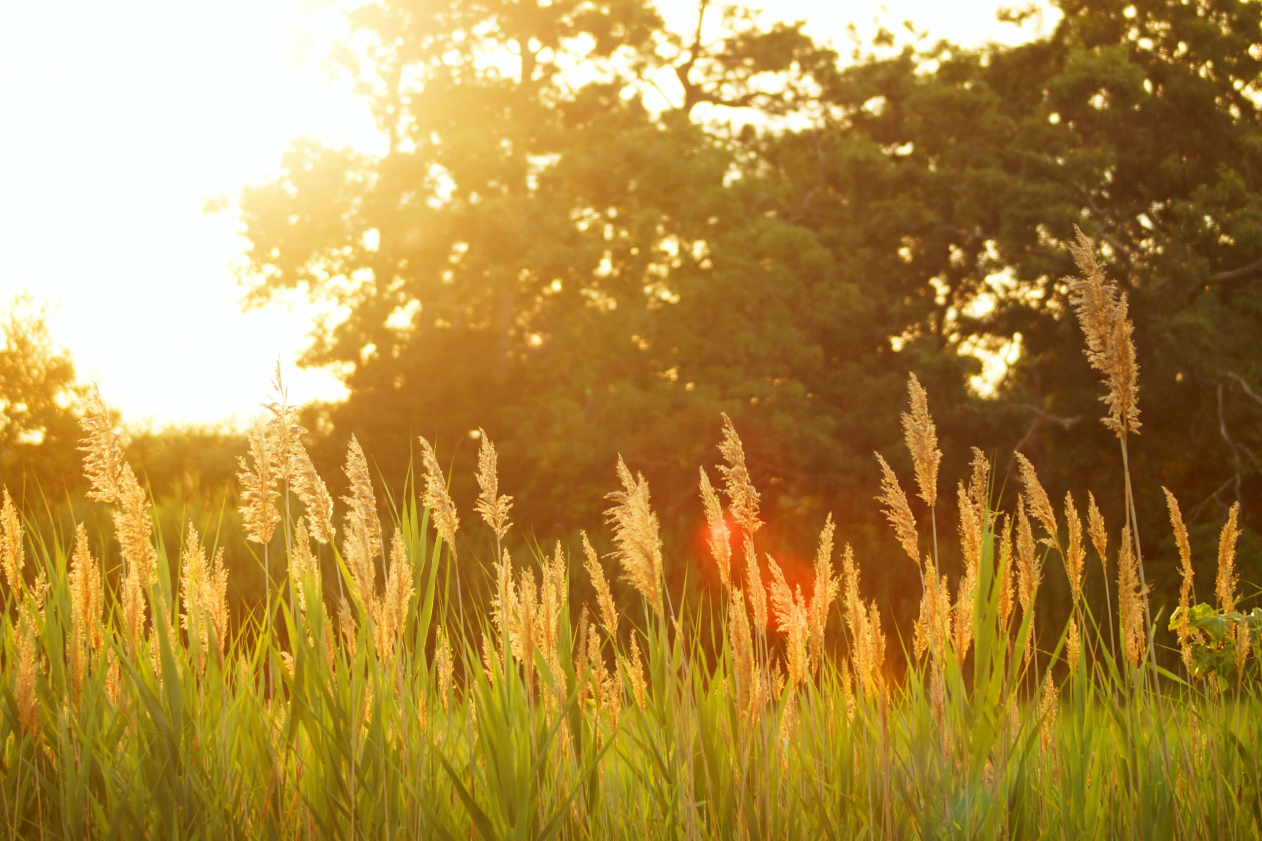 Summer Lawn Care To-Do List