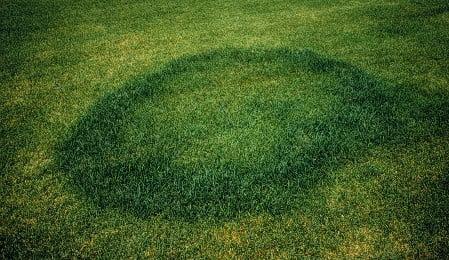Fairy Rings in MN Lawns